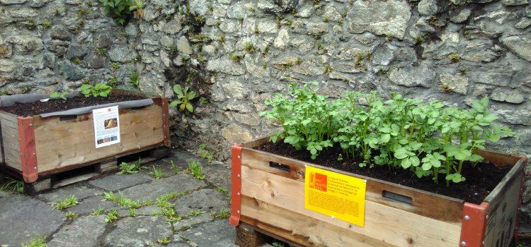 Bellinzona capitale agricola: promuoviamo orti e frutteti urbani!